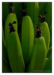 79393green_bananas.jpg