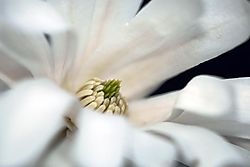 79461white_flower_1_8x12.jpg