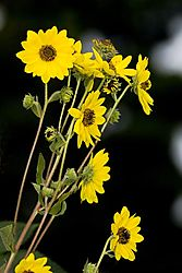 79461yellow_flower_group.jpg