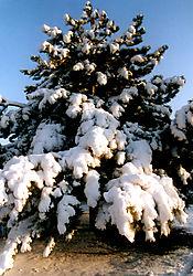 80490Christmas-Tree-Collection-I.jpg