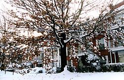 80490Christmas-Tree-No-3.jpg
