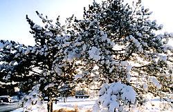 80490More-Christmas2.jpg
