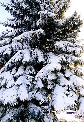 80490More-Christmas3.jpg