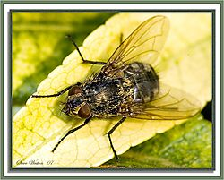 84037Fly-on-Leaf---2.jpg