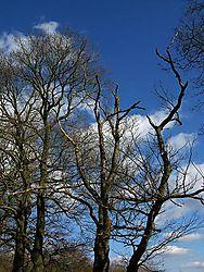 84037Trees---2.jpg
