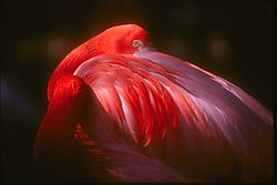8638Flamingo-copy.jpg