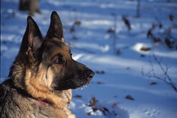 9705Niko_snow_woods_lg.jpg