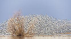 A_Cloud_of_Geese_San_Joaquin_Valley_Wetlands_2_.jpg