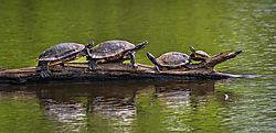 A_Turn_of_Turtles_2-00201-2.jpg