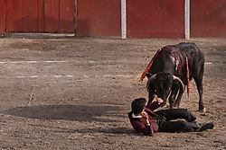 A_bad_day_to_be_a_Matador-1.jpg