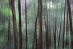 Abstract_Forest.jpg