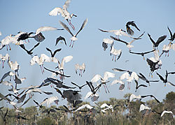 Africa_2015_D-750B_201_flock_of_birds_5x7.jpg