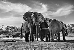 Africa_trip_15-1106-Edit.jpg