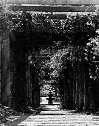 Airlie_Gardens.jpg