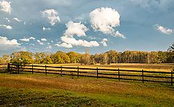 Alabama_Afternoon_0973_.jpg