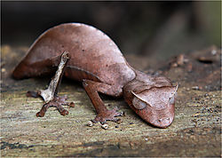 Alien_Chameleon_Madagascar.jpg
