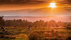 Amish_Landsape.jpg