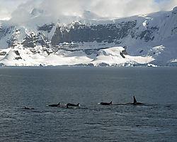 Antarctica_2_15_DSC_0147.jpg