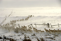 Antelope_Herd.jpg