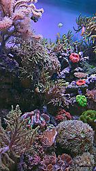 Aquatic-Life-PPW.jpg
