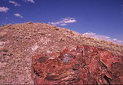 Arizona-002-A.JPG