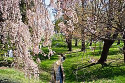 Arlington_National_Cemetery.jpg