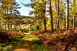Armathwaite_Forest.jpeg