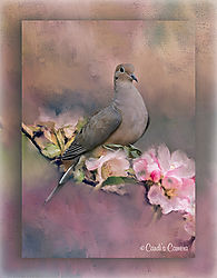 Artsy_Lonesome_Dove_framed_nikonians.jpg