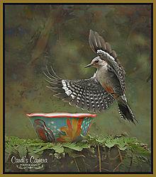 Artsy_Woodpecker_Texture.jpg