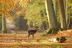 Ashridge_Dawn.JPG