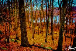 Autumn_Color1.jpg