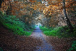 Autumndogwalk.jpg