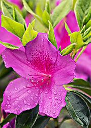 Azailia_W-RaindropsCrpt.jpg