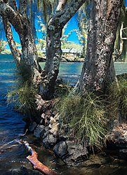 BAYSIDE_TREES.JPG