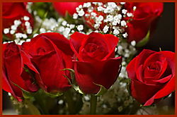 BDAY_Roses_1011.jpg