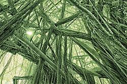 BINARY_SUN_and_BANYON_TREE_0015.jpg