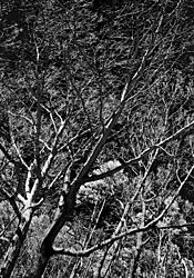 BLACK_FOREST.jpg