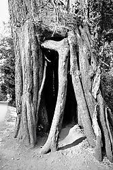 B_W_Tree_Hole.jpg