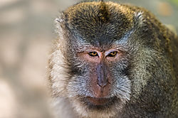 Baboon_mother_and_young_in_the_early_morning_light_Caption_-5.JPG