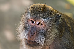 Baboon_mother_and_young_in_the_early_morning_light_Caption_-6.JPG