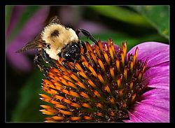 Bee-d.jpg