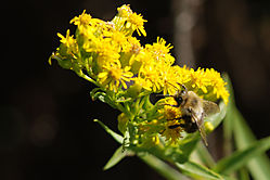 Bee110.jpg