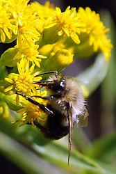 Bee25.jpg