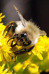 Bee31.jpg