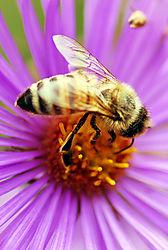 Bee_22.jpg