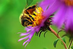 Bee_3.jpg