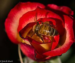 Bee_Gathering.jpg