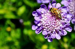 Bee_Nice.jpg