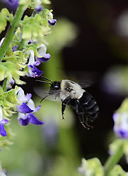 Bee_Photo_1.jpg