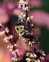 Bee_Photo_2.jpg
